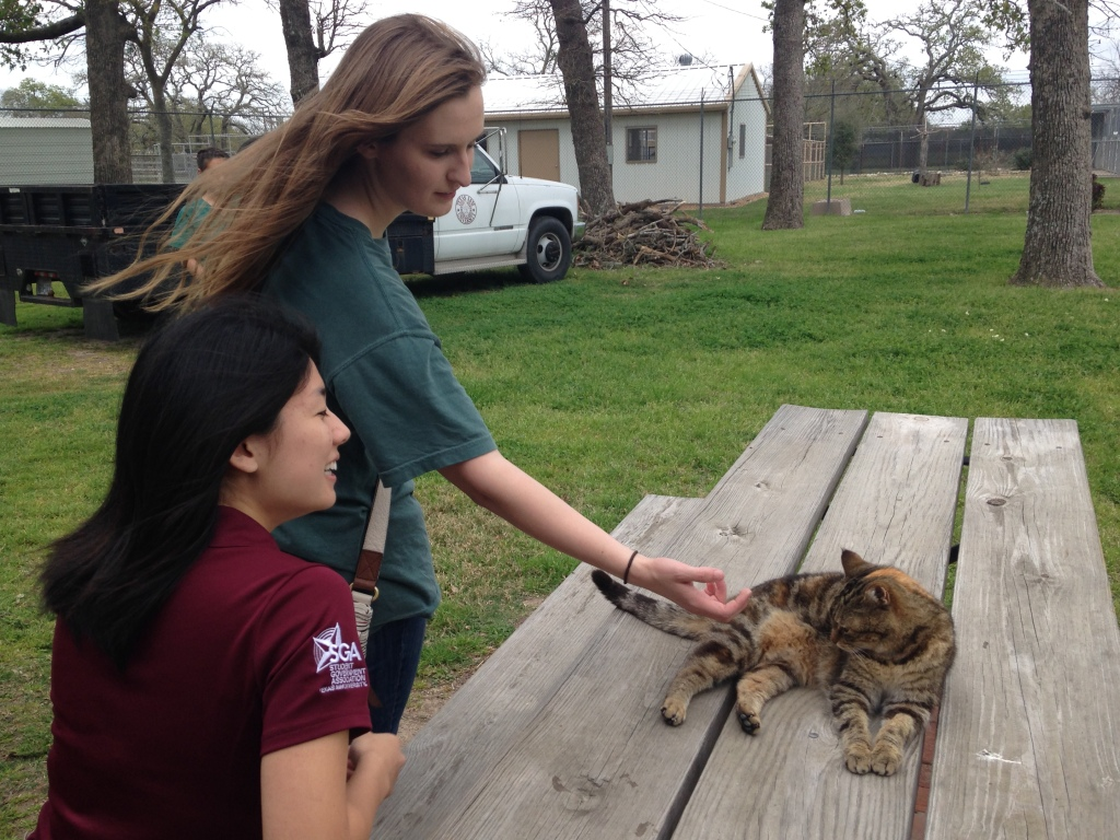 University Scholars Gabby Lessen '18 and Barbara meet the Winnie Carter Wildlife Center's resident cat.