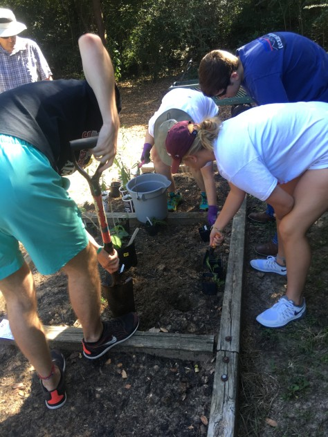 Students dig in a garden bordered by large timbers.